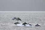 Dolphin Watching in British Columbia, Ecotourism