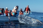Vacation time in Mexico, Gray Whale watching, Baja California