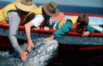Gray Whale watching on Mexico Vacations of the Baja California, Mexico