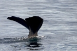 New Zealand Attractions, Sperm Whale Cruises of Kaikoura Coast