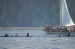 The Tuan is a whale watching operating off Northern Vancouver Island