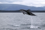 High jumping Dolphin, such great heights