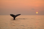 Pictures of Sunsets with a Whale Tail