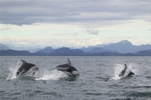 Whale watching with Dolphin Encounters