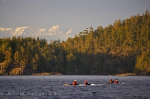 Kayakers off Northern Vancouver Island in British Columbia sit patiently for a pod of Orca to pass by.