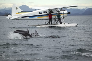 Ongoing research on Dolphins, Marine Biology