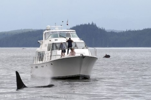 Photo of a luxurious yacht in Broughton Archipelago Provincial Marine Park off Vancouver Island in British Columbia.
