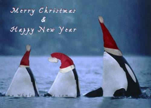 Funny Whales For Christmas
