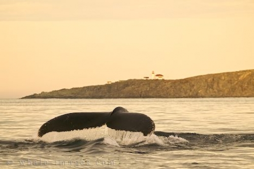 http://www.whale-images.com/data/media/3/wildlife-photography_32.jpg